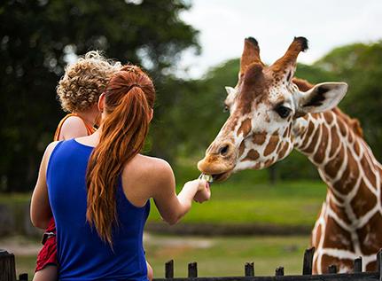 Billetterie : puy du Fou, zoos …